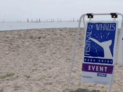 Dana-Point-Festival-of-Whales-Aluminum-A-frame-Sign